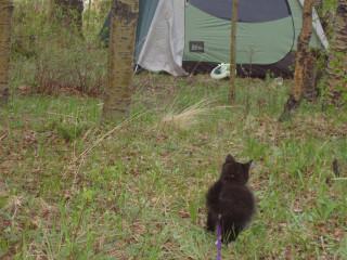Izzy exploring the campsite