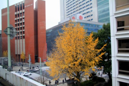 дерево гингко