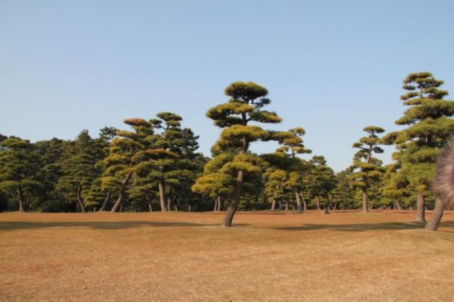 на территории Императорского Дворца в Токио