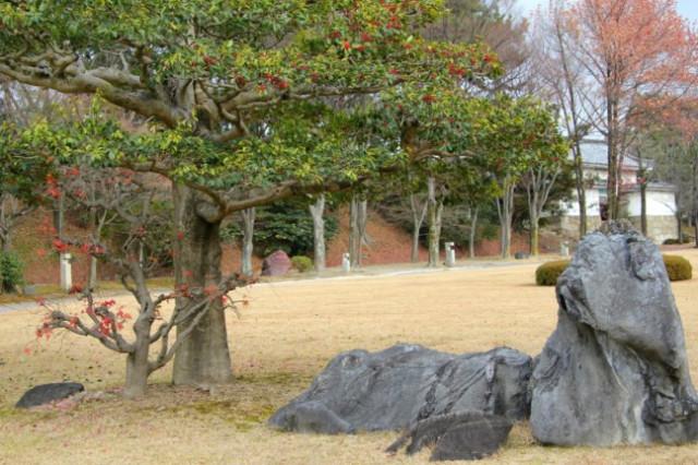 деревца