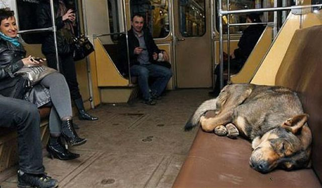 commutingdogsinrussia