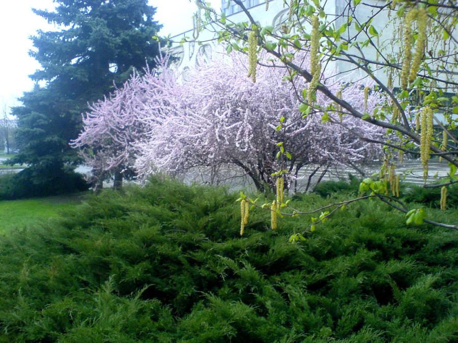 благоухание весны