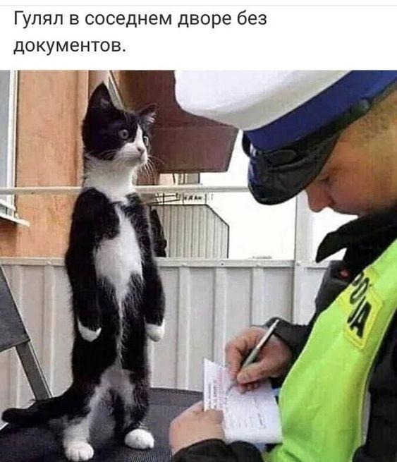 https://www.pinterest.ru/pin/600386194062765930/
