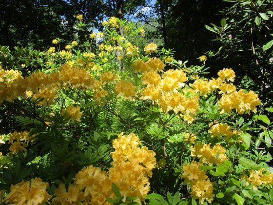 Фото: Ботанический сад Тверского Государственного Университета