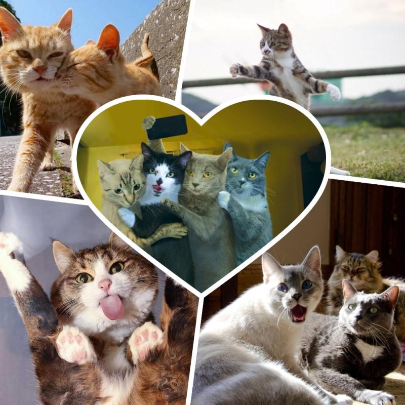 Котам, кошкам и котятам посвящается ... Людям смотреть не возбраняется:_)