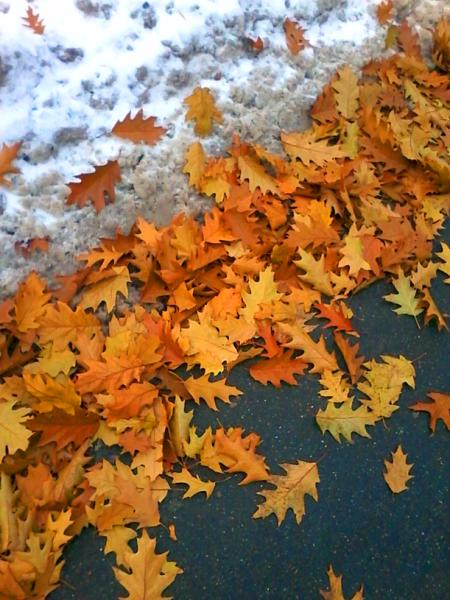дубовые листья.png