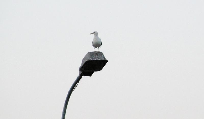 Чайка.jpg