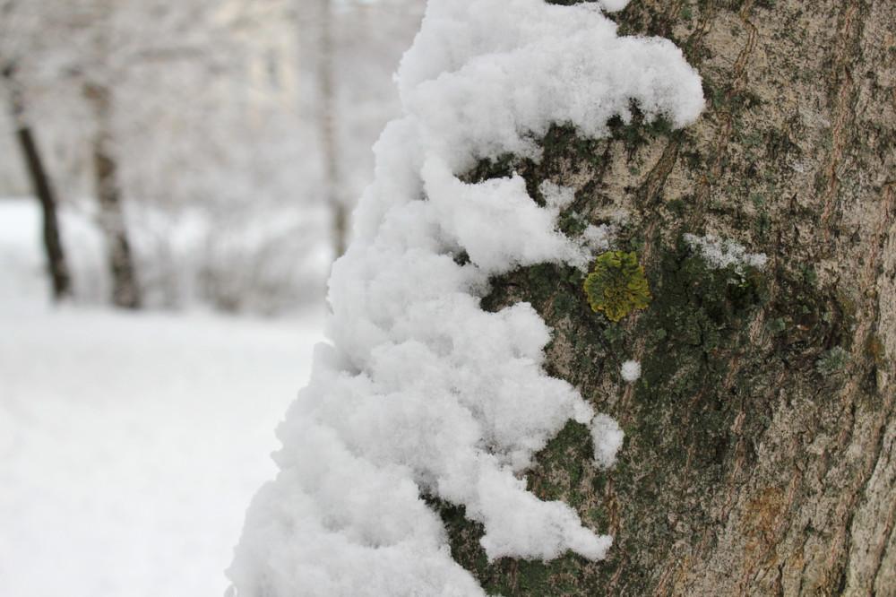 снежность 11.jpg