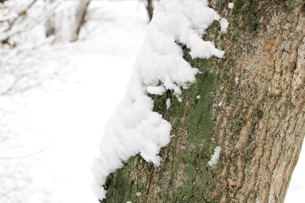 снежность 7.jpg