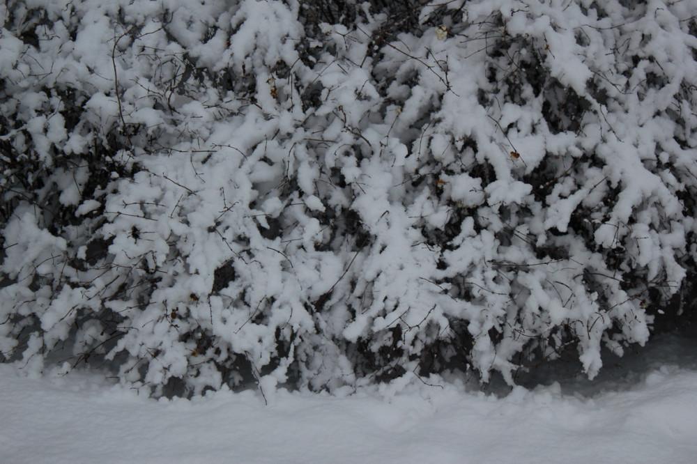снежность 6.jpg