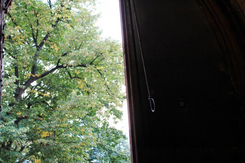 Двери Деревья.jpg