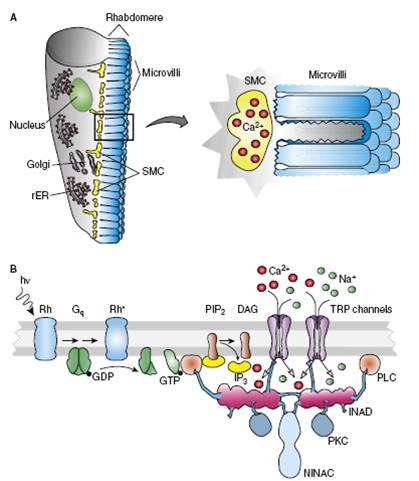 transduction-1