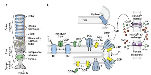 transduction 2