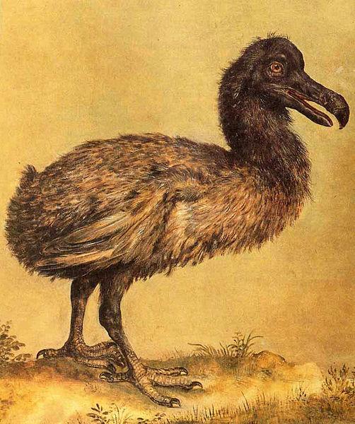 502px-Hoefnagel_dodo