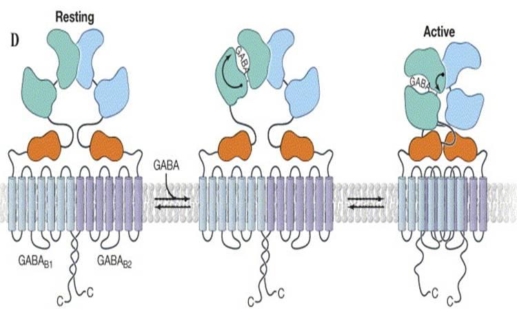 VFT receptor