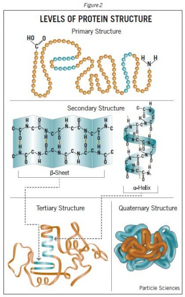 the production of protein molecules