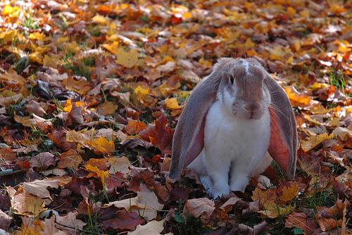 Заяц по