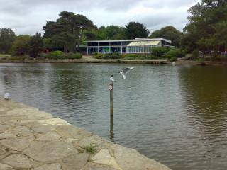 Gull on a stick