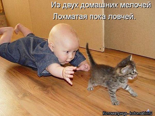 kotomatritsa_0z