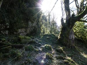 4 Лес ранней весной, дорога на Решеву