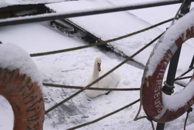 Озеро Янтарное Лебедь