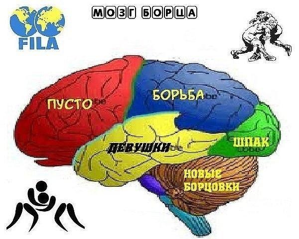 мозг борца