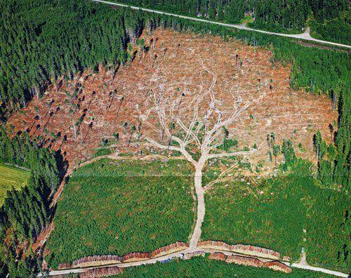 дерево из вырубок
