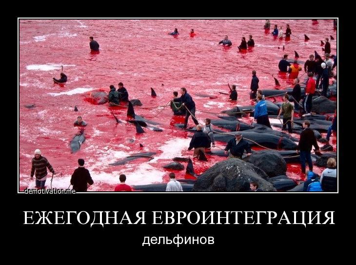ежегодая евроинтеграция дельфинов