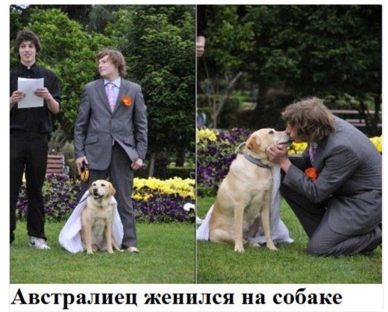 женился на собаке