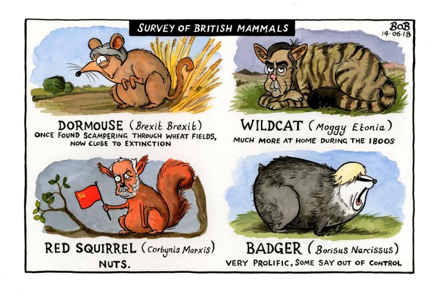 британские млекопитающие