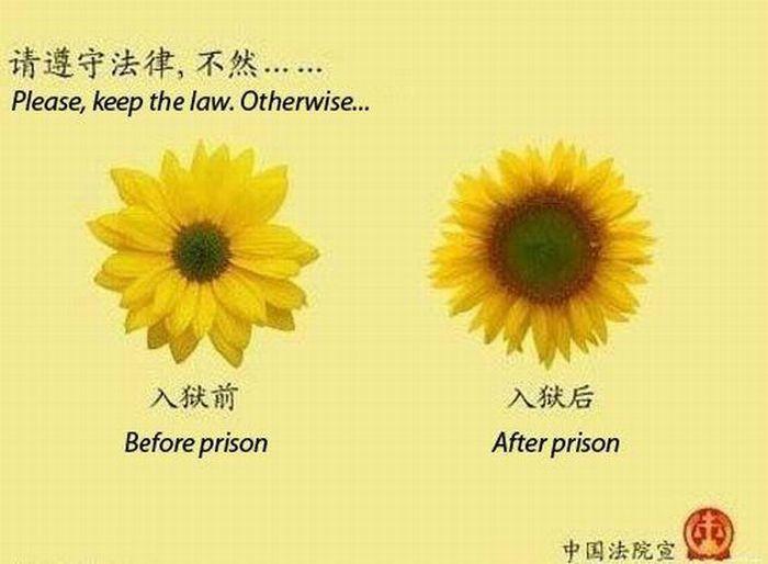 до и после тюрьмы