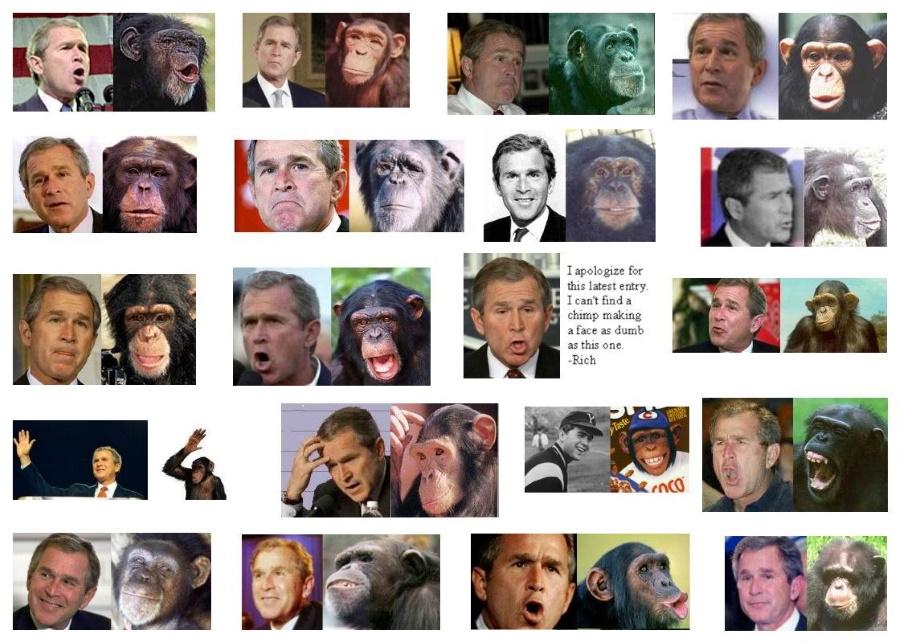 Буш и шимпанзе