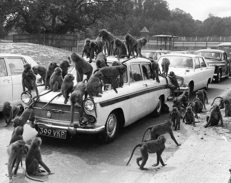 обезьяны и машины