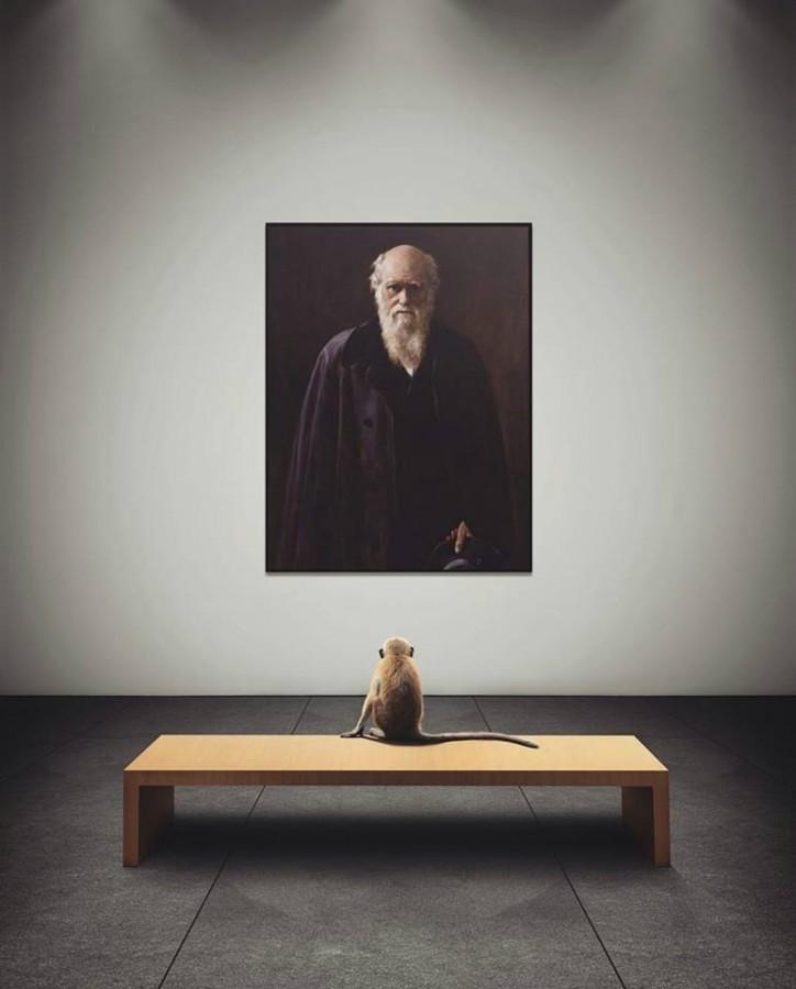 обезьяна и Дарвин