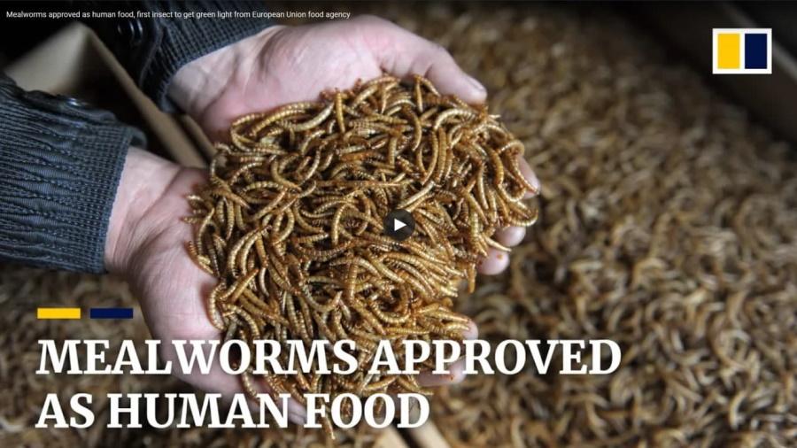 мучные черви для прекариата