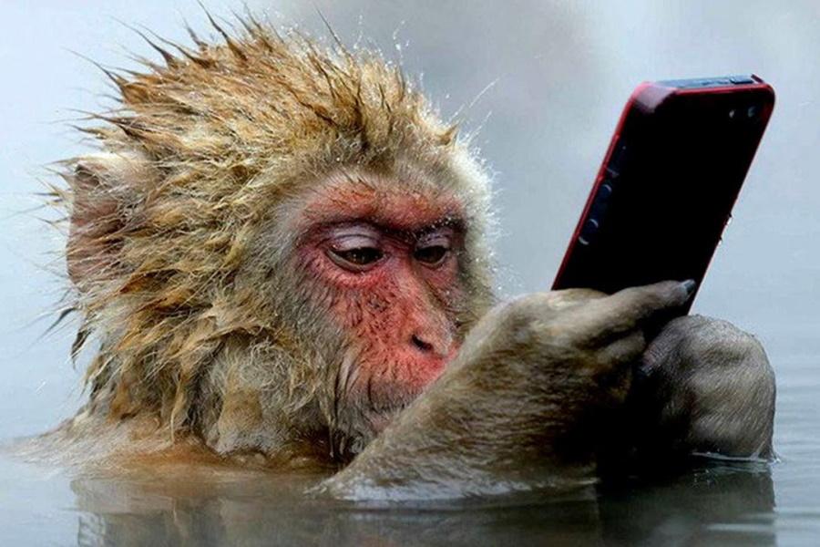 обезьяна со смартфоном