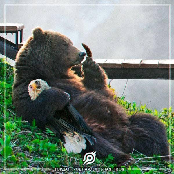 медведь и орлан