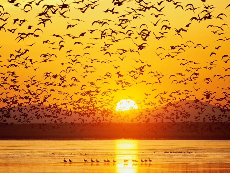 закат и птицы