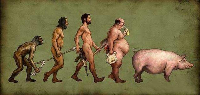происхождение свиньи
