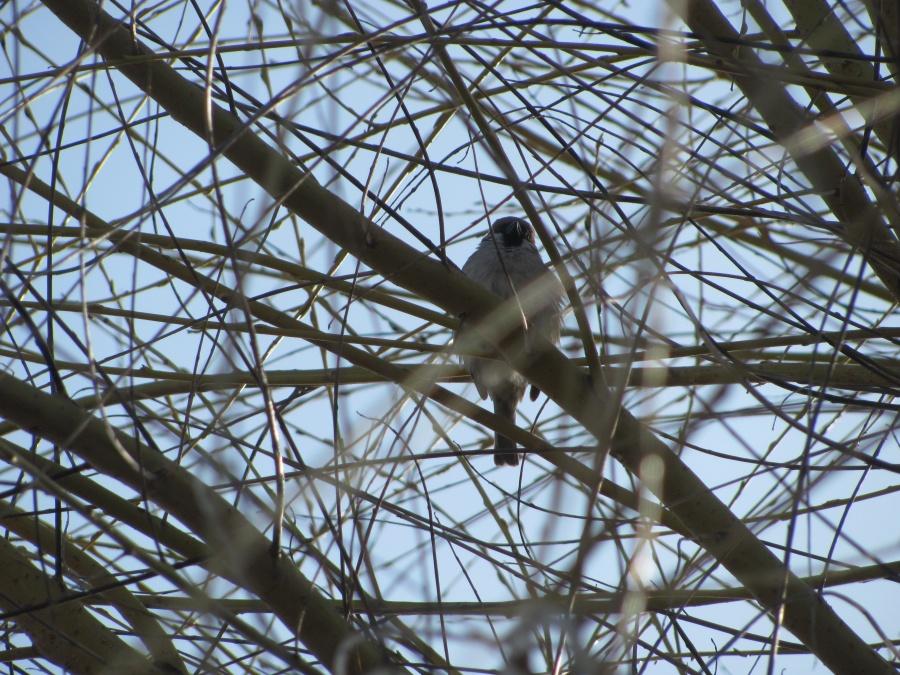 птаха в ветвях