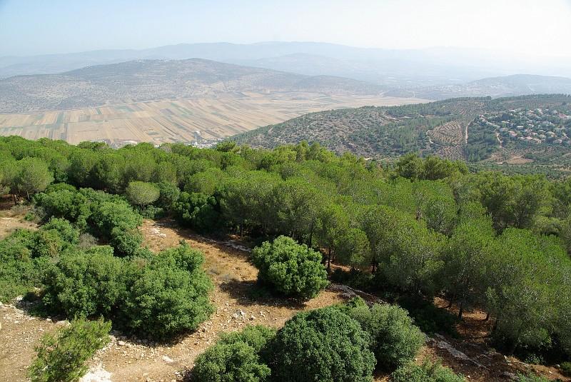 лесопосадки в Израиле