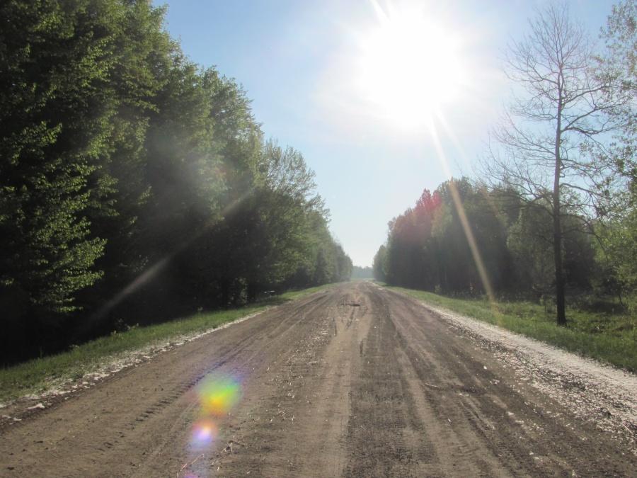 дорога в весеннем лесу
