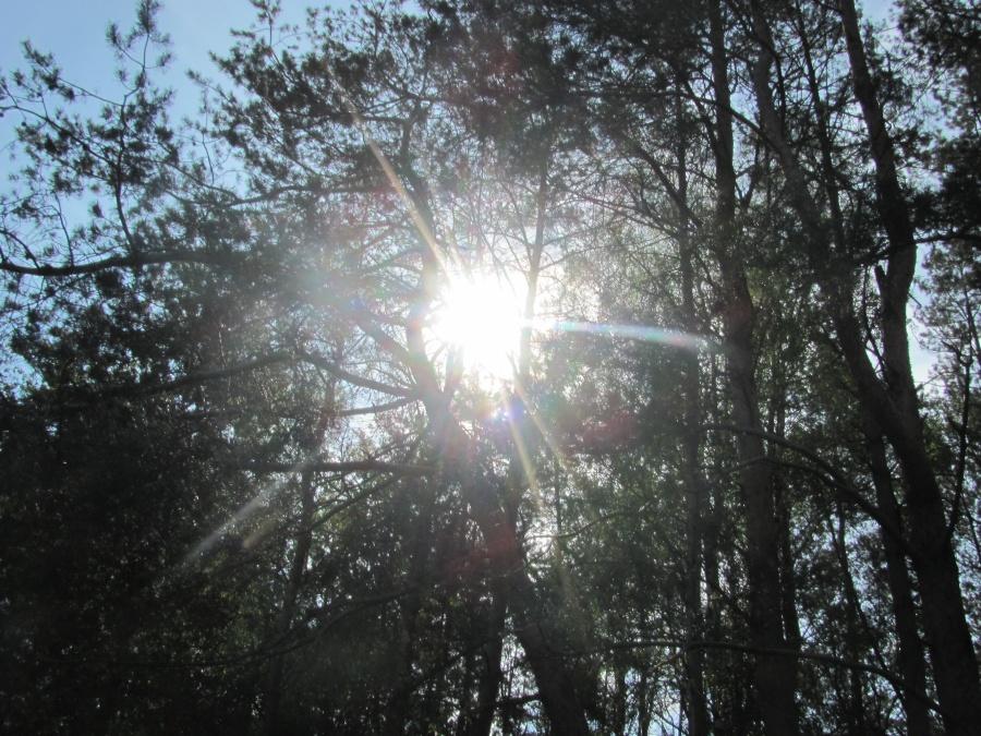в лесополосе 1