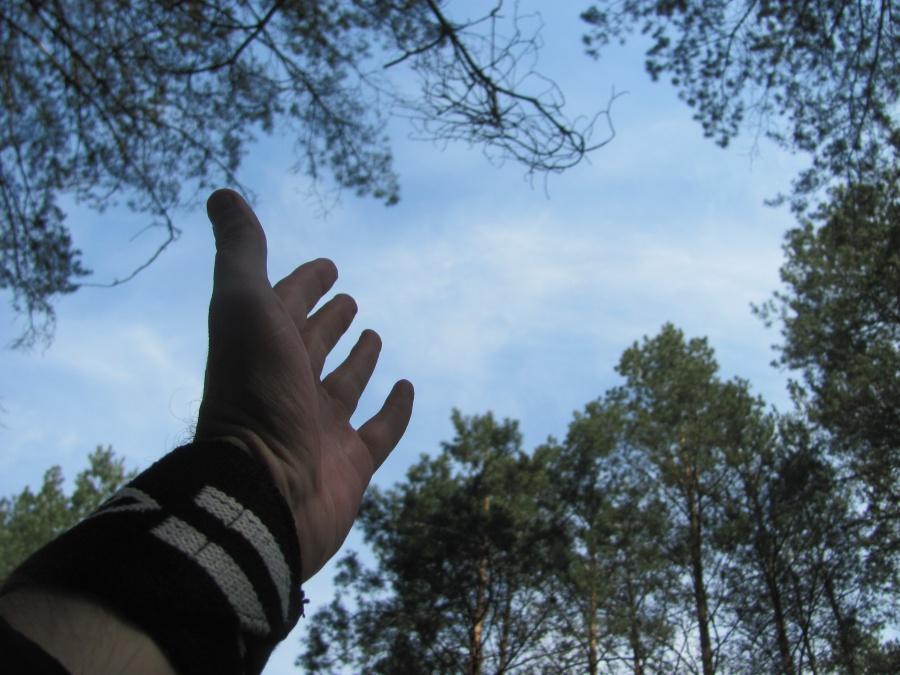 в лесополосе 2