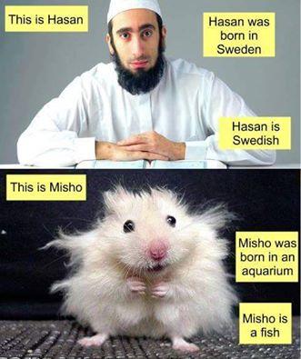 Хасан и Мишо