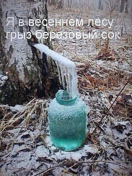 грыз берёзовый сок