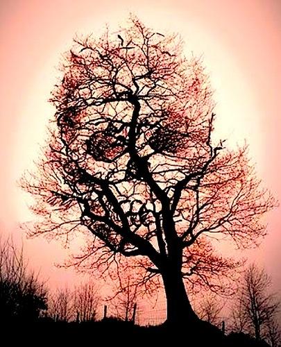 дерево-череп