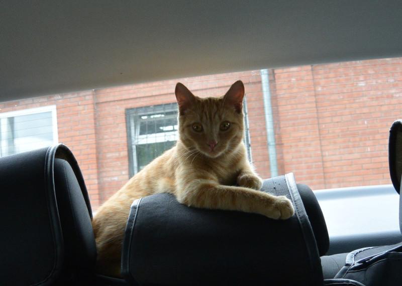 Томик к путешествию готов