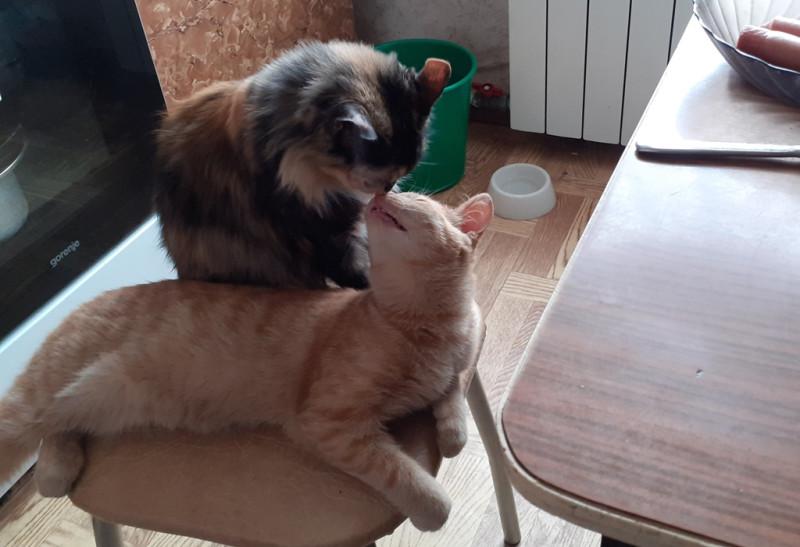 Лапа и Томик в ожидании ужина