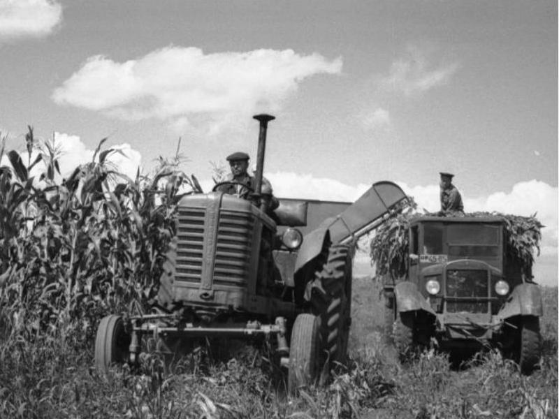 Уборка кукурузы в Минусинском районе, 1957 год, фото Прибура В.С.